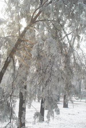 iarna22